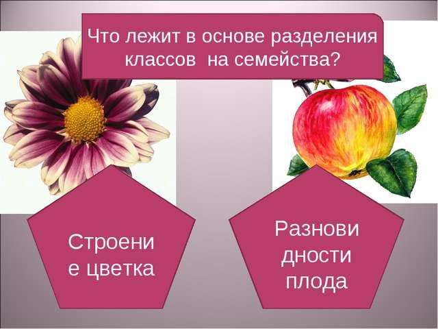 Что лежит в основе разделения классов на семейства? Строение цветка Разновидн...