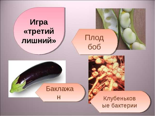Игра «третий лишний» Плод боб Баклажан Клубеньковые бактерии