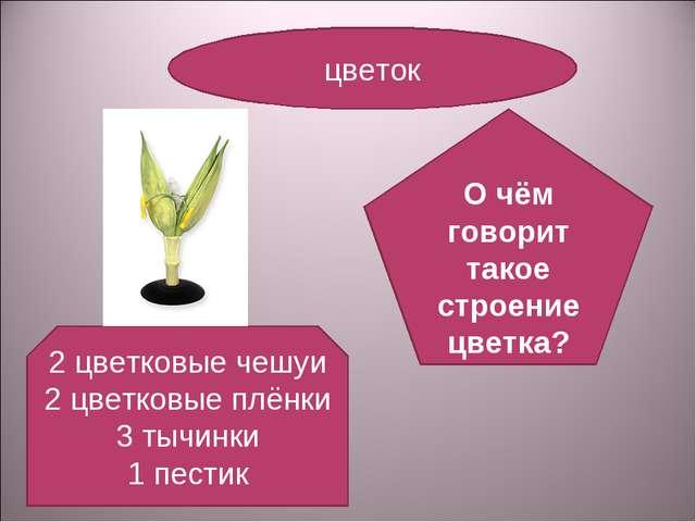 цветок 2 цветковые чешуи 2 цветковые плёнки 3 тычинки 1 пестик О чём говорит...