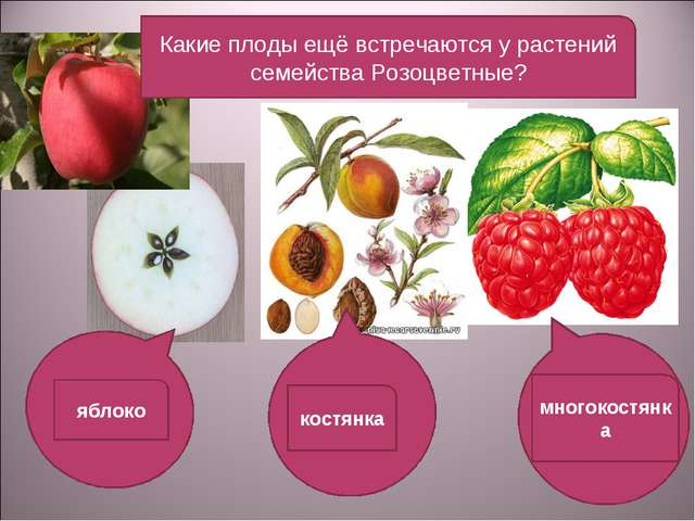 Какие плоды ещё встречаются у растений семейства Розоцветные? яблоко костянка...