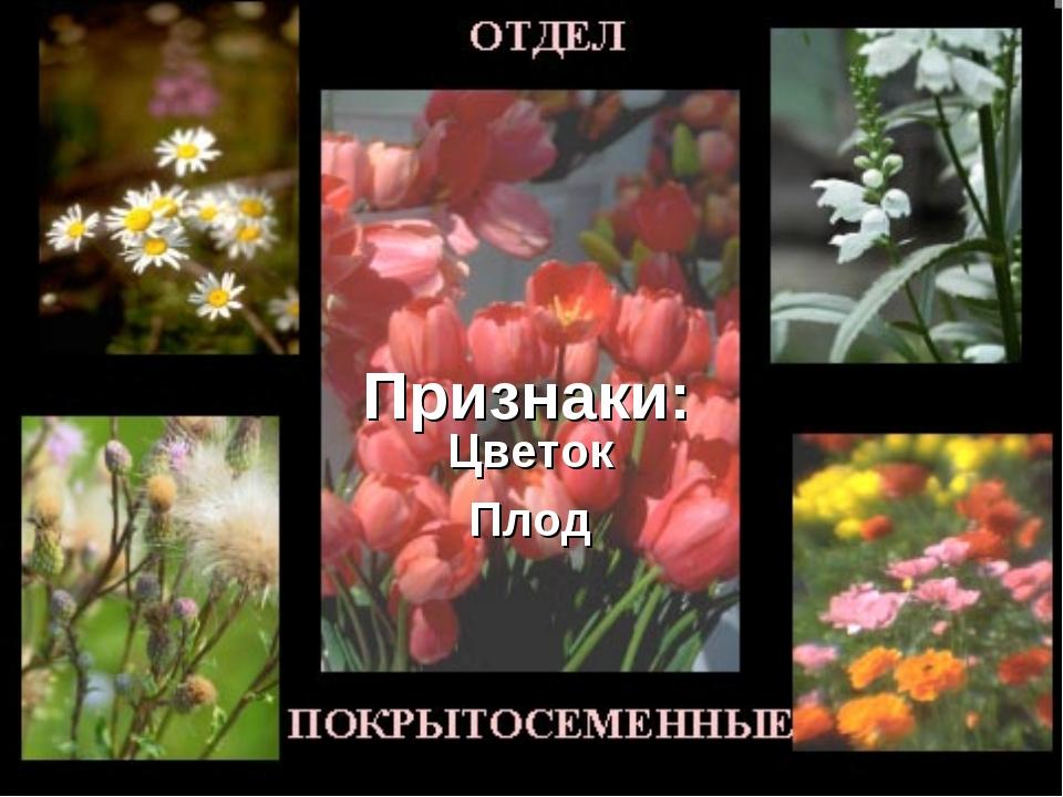 Признаки: Цветок Плод
