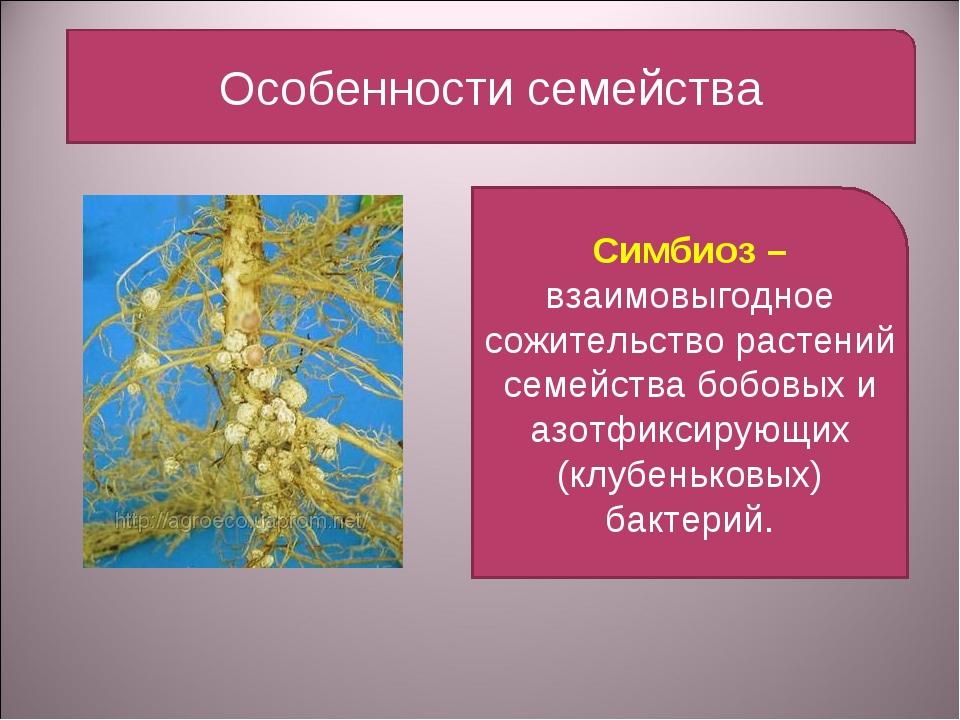 Особенности семейства Симбиоз – взаимовыгодное сожительство растений семейств...