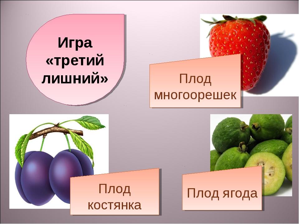 Игра «третий лишний» Плод многоорешек Плод костянка Плод ягода