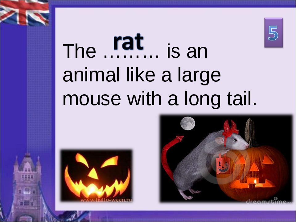 The ……… is an animal like a large mouse with a long tail.