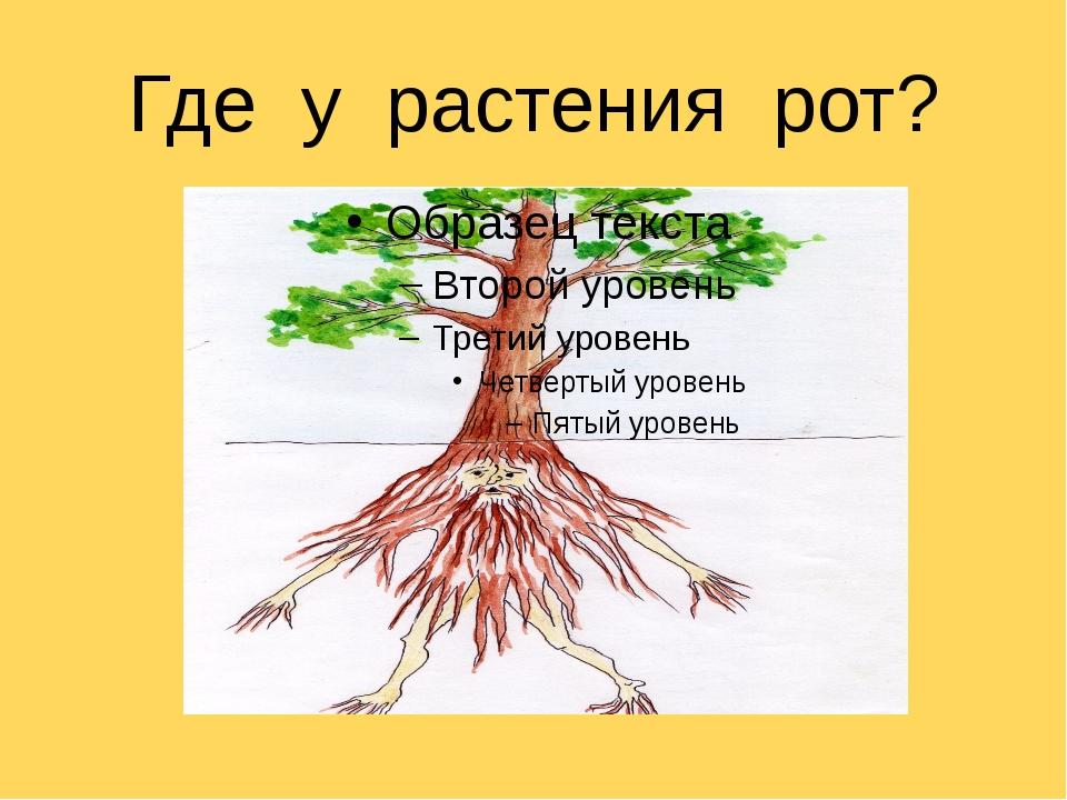 Где у растения рот?
