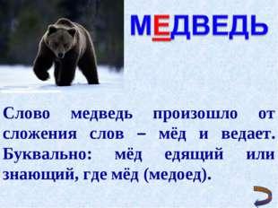 Слово медведь произошло от сложения слов – мёд и ведает. Буквально: мёд едящи