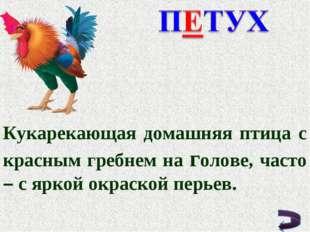 Кукарекающая домашняя птица с красным гребнем на голове, часто – с яркой окра