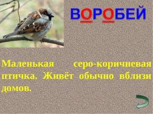 Маленькая серо-коричневая птичка. Живёт обычно вблизи домов.