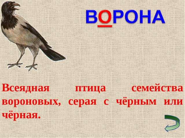 Всеядная птица семейства вороновых, серая с чёрным или чёрная.