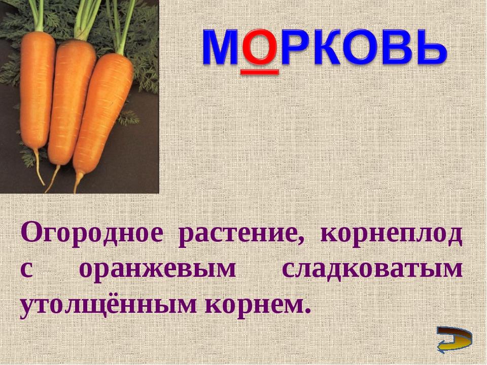 Огородное растение, корнеплод с оранжевым сладковатым утолщённым корнем.