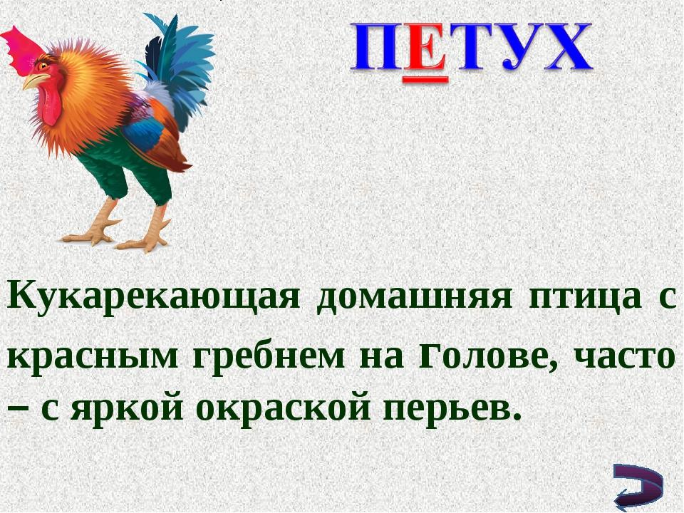 Кукарекающая домашняя птица с красным гребнем на голове, часто – с яркой окра...