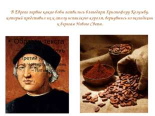 В Европе первые какао-бобы появились благодаря Христофору Колумбу, который пр