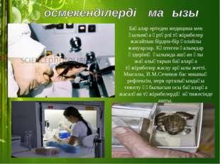 Бақалар ертеден медицина мен ғылымға әртүрлі тәжірибелер жасайтын бірден-бір