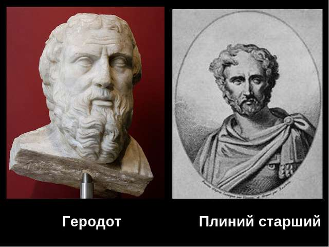 Геродот Плиний старший