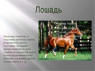 Лошадь Насколько известно, в отдельных регионах лошадь встречается в диком со