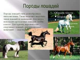 Породы лошадей Породы лошадей очень разнообразны и многочисленны. Также выдел