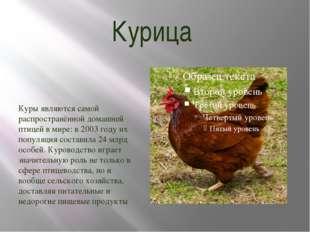 Курица Куры являются самой распространённой домашней птицей в мире: в 2003 го