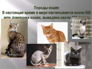 Породы кошек В настоящее время в мире насчитывается около 600 млн домашних ко