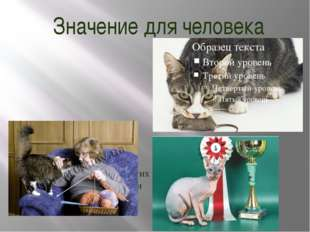 Значение для человека На протяжении 10 000 лет кошки ценятся человеком, в том
