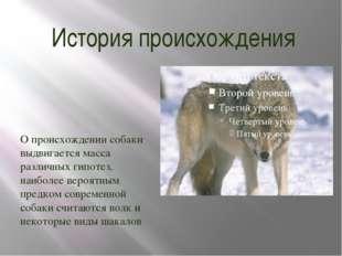 История происхождения О происхождении собаки выдвигается масса различных гипо