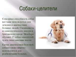 Собаки-целители Сенсорная способность собак всё чаще используется для лечения