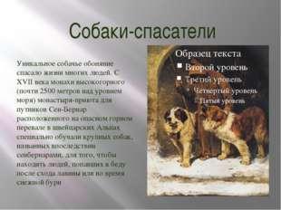 Собаки-спасатели Уникальное собачье обоняние спасало жизни многих людей. С XV