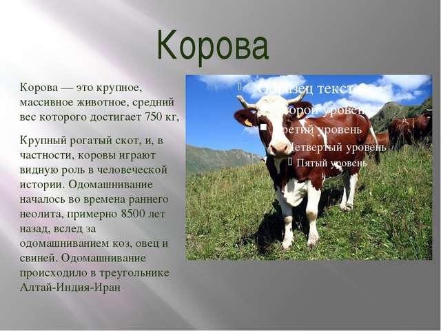 Корова Корова — это крупное, массивное животное, средний вес которого достига...