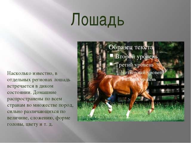 Лошадь Насколько известно, в отдельных регионах лошадь встречается в диком со...