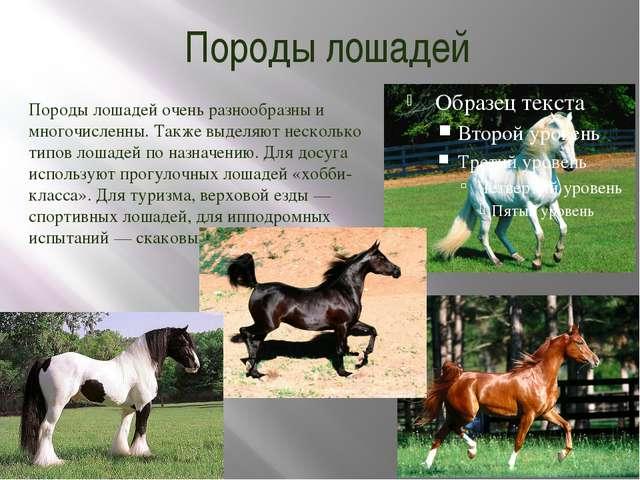 Породы лошадей Породы лошадей очень разнообразны и многочисленны. Также выдел...