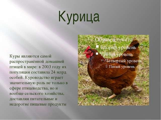 Курица Куры являются самой распространённой домашней птицей в мире: в 2003 го...