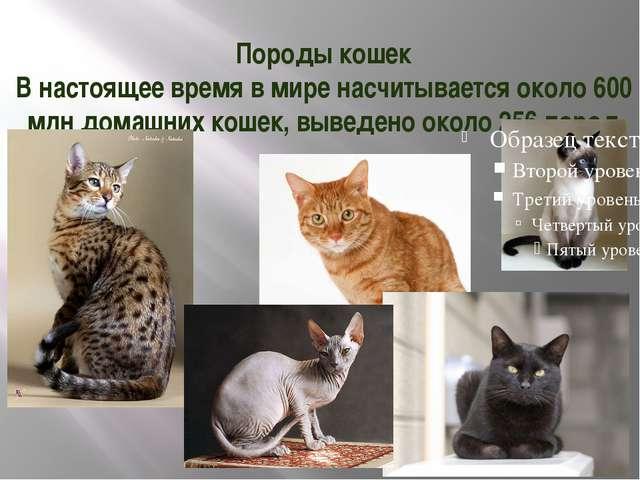 Породы кошек В настоящее время в мире насчитывается около 600 млн домашних ко...