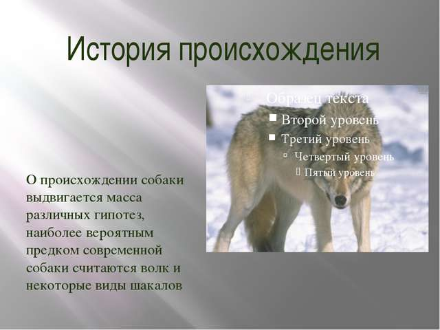 История происхождения О происхождении собаки выдвигается масса различных гипо...