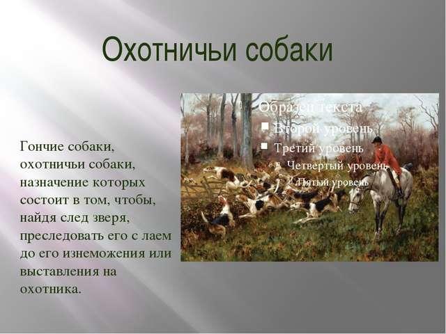 Охотничьи собаки Гончие собаки, охотничьи собаки, назначение которых состоит...