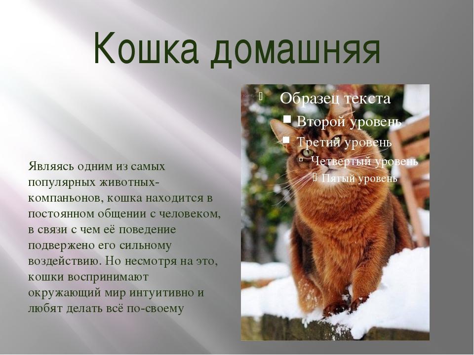 Кошка домашняя Являясь одним из самых популярных животных-компаньонов, кошка...