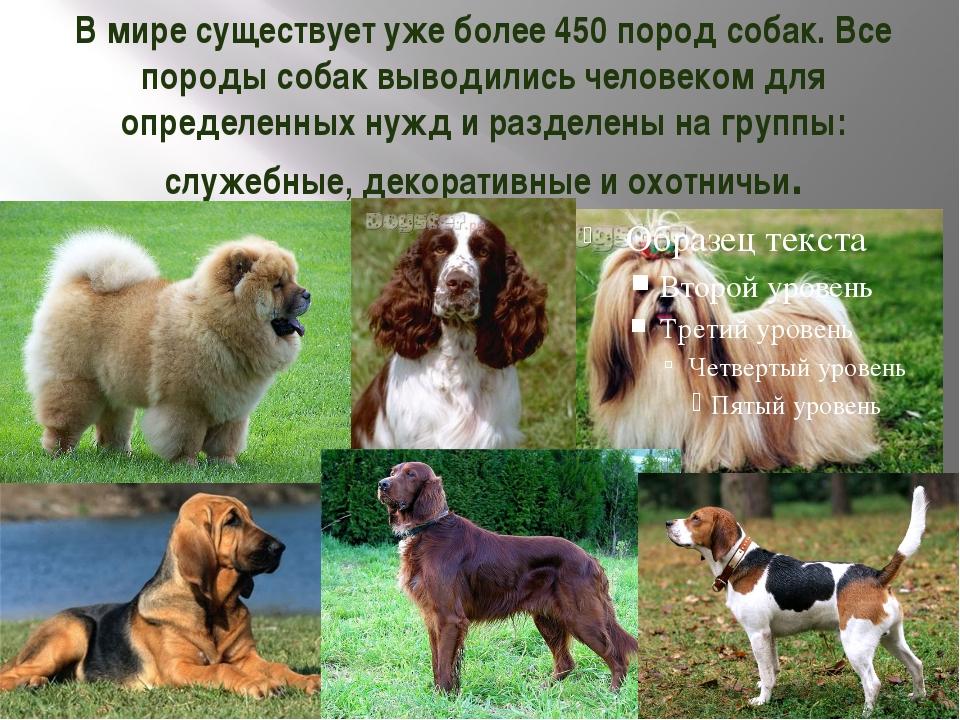 В мире существует уже более 450 пород собак. Все породы собак выводились чело...