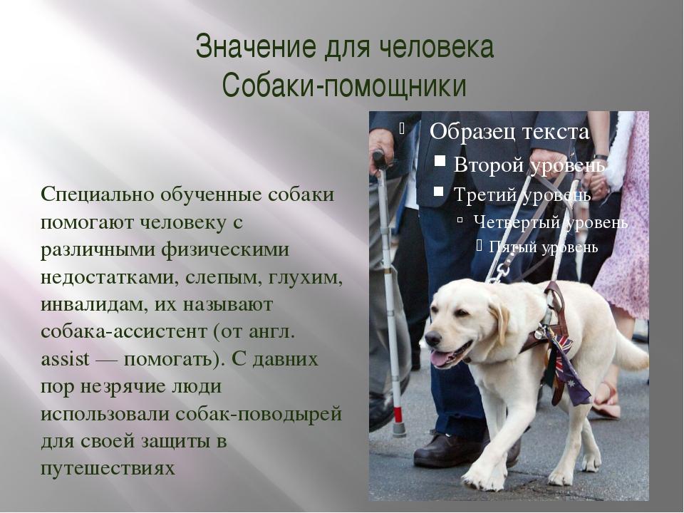 Значение для человека Собаки-помощники Специально обученные собаки помогают ч...