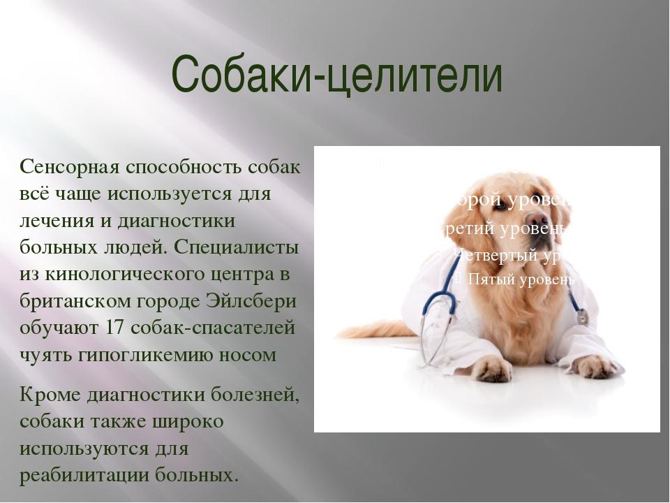 Собаки-целители Сенсорная способность собак всё чаще используется для лечения...