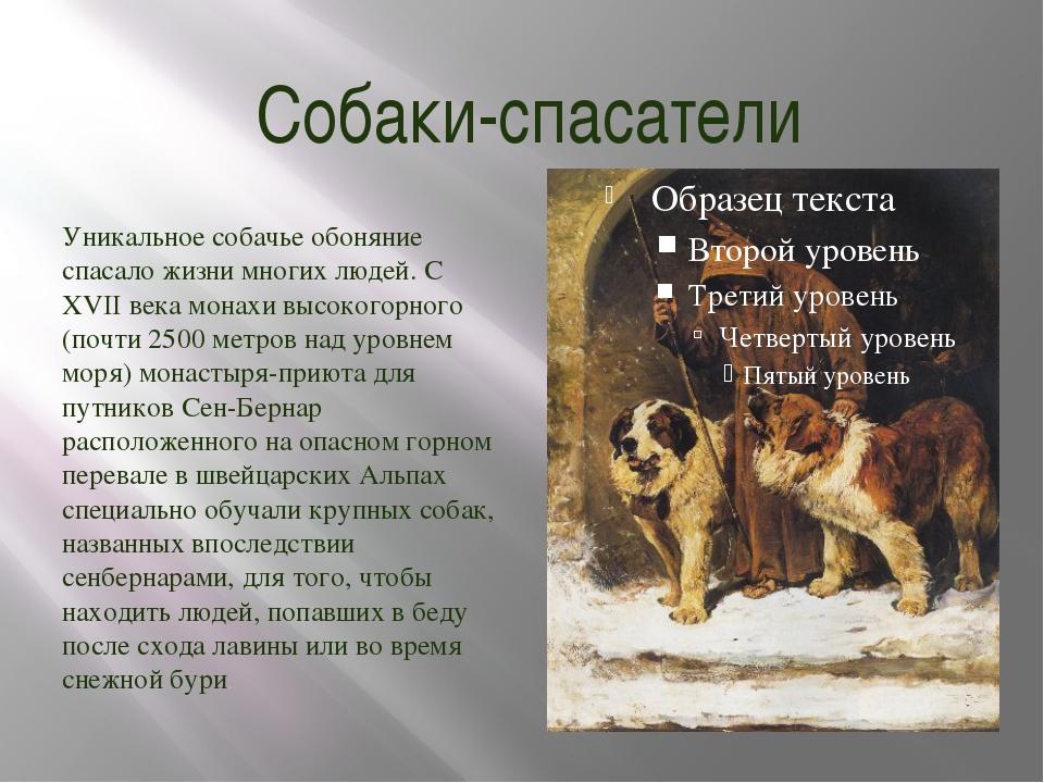 Собаки-спасатели Уникальное собачье обоняние спасало жизни многих людей. С XV...