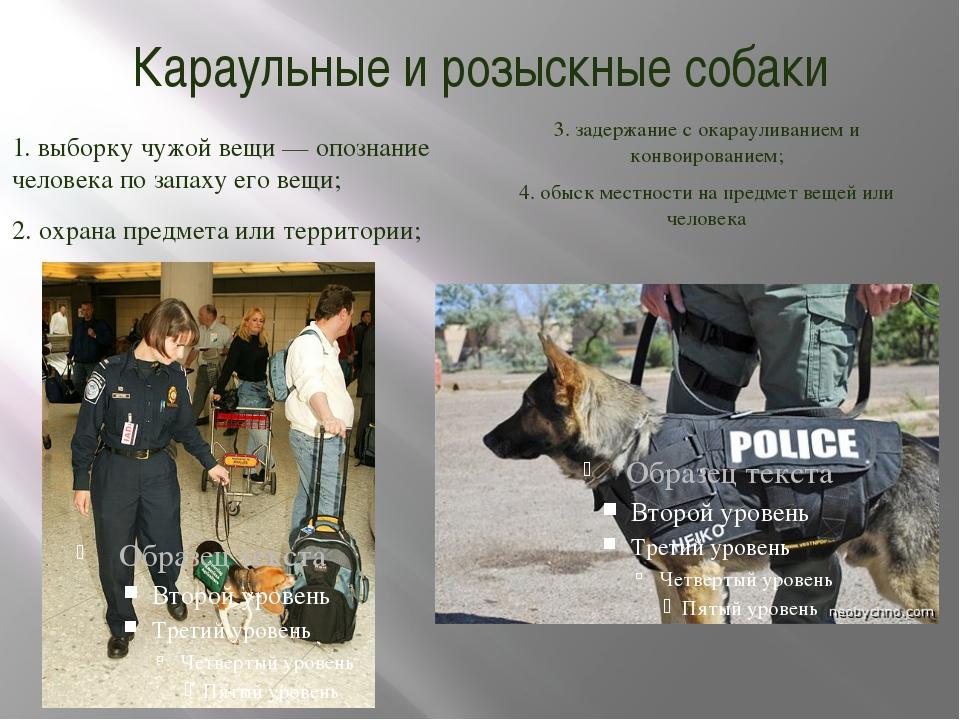Караульные и розыскные собаки 1. выборку чужой вещи — опознание человека по з...