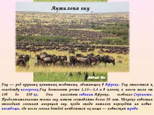 Гну — род крупных копытных животных, обитающих вАфрике. Гну относятся к семе