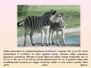 Зебры относятся к непарнокопытнымживотным, потому что у них вес тела приходи