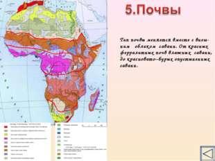 Тип почвы меняется вместе с внеш- ним обликом саванн. От красных ферралитных