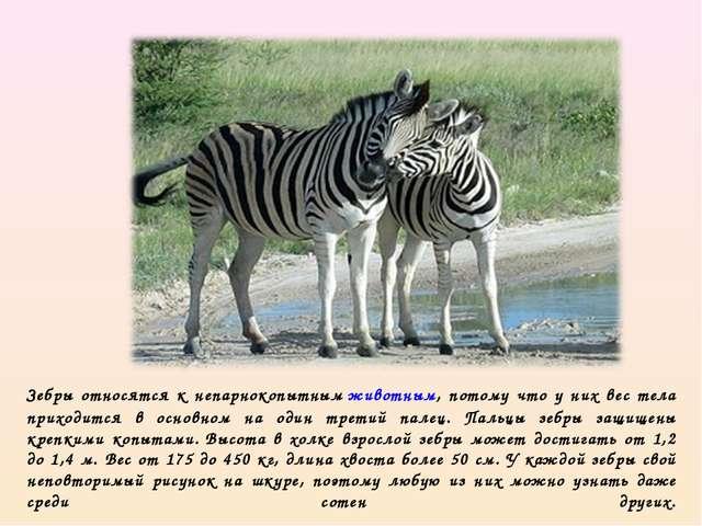 Зебры относятся к непарнокопытнымживотным, потому что у них вес тела приходи...