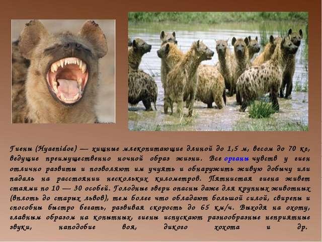 Гиены(Hyaenidoe) — хищные млекопитающие длиной до 1,5 м, весом до 70 кг, вед...
