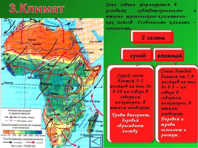 Зона саванн формируется в условиях субэкваториального и южного тропического к...