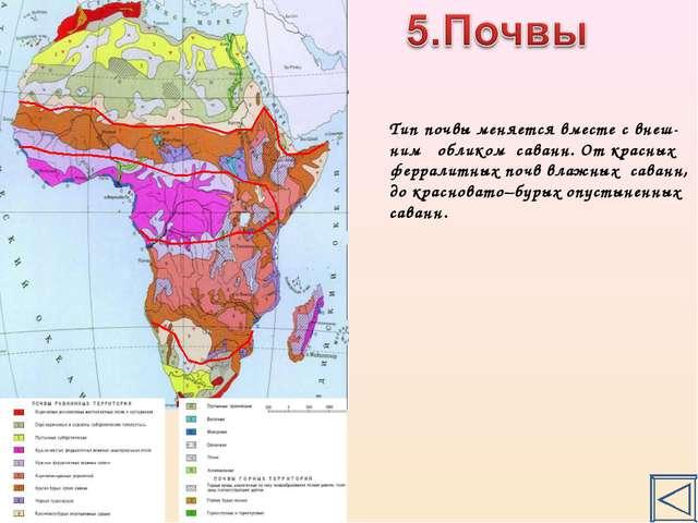 Тип почвы меняется вместе с внеш- ним обликом саванн. От красных ферралитных...