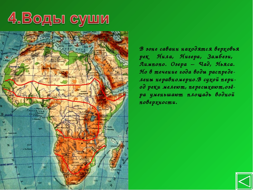 В зоне саванн находятся верховья рек Нила, Нигера, Замбези, Лимпопо. Озера –...