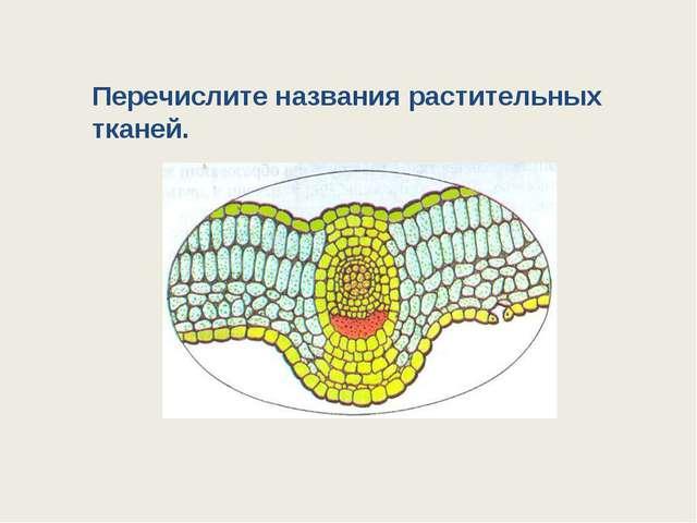 Перечислите названия растительных тканей.