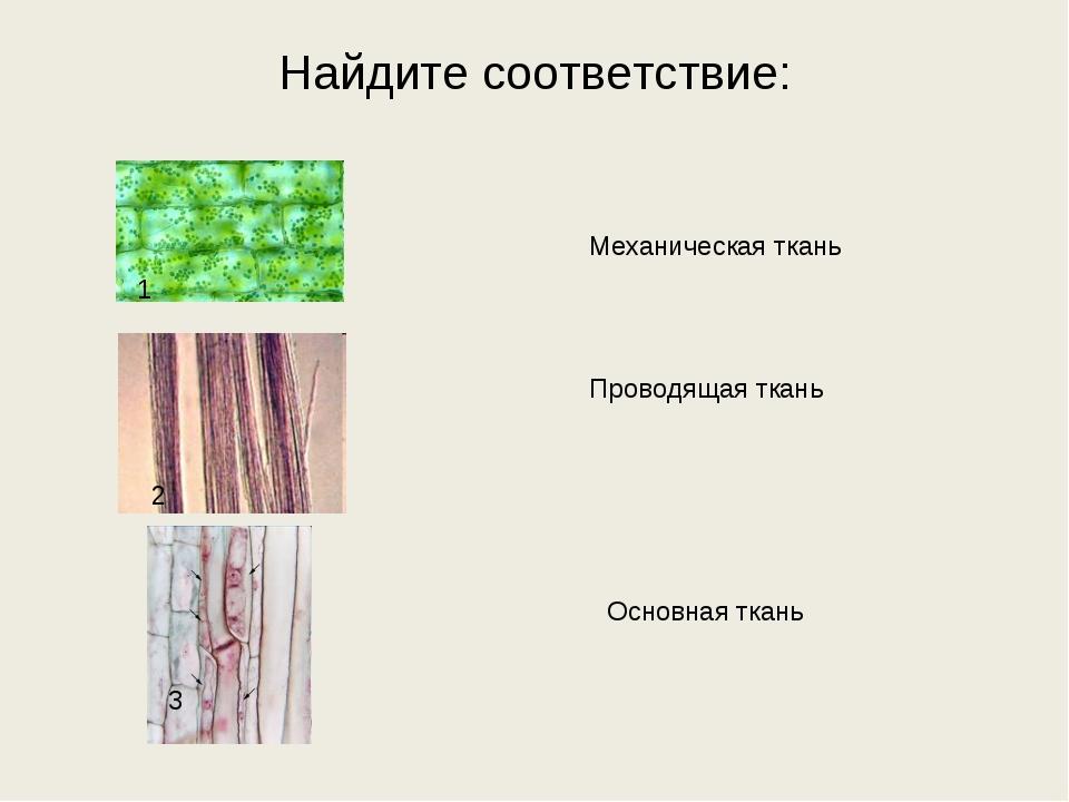 Найдите соответствие: Основная ткань Проводящая ткань Механическая ткань 1 2 3