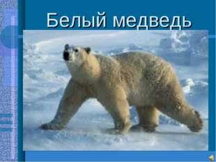 Белый медведь Самый крупный среди хищников(до3м.,800-1000кг.) Необходимые усл